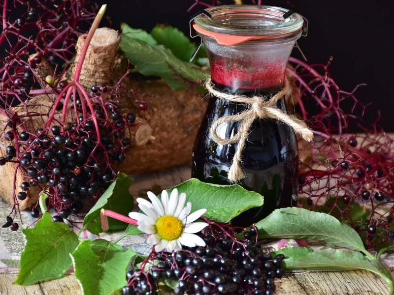 Elderberry for Children